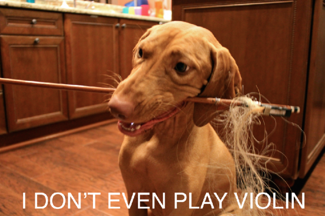 dogshaming: