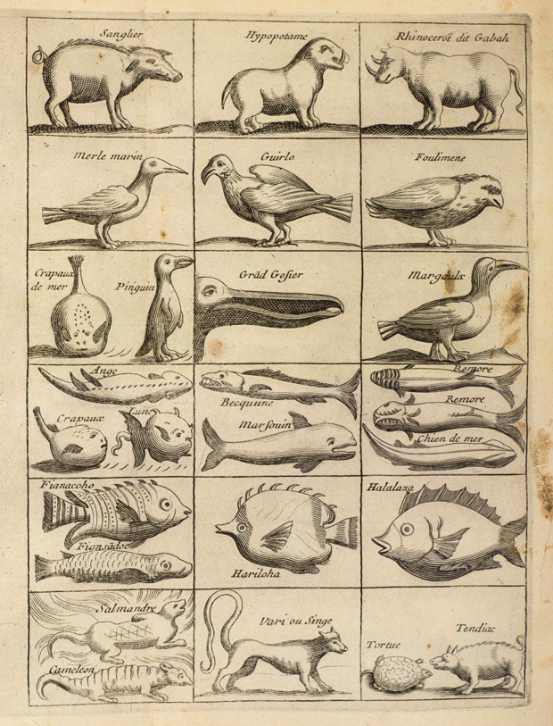 explore-blog:  Vintage scientific illustrations of animals by Étienne de Flacourt (1607-1660)