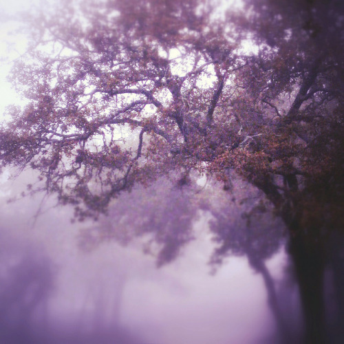 Fall fog by Stacey Bramhall
