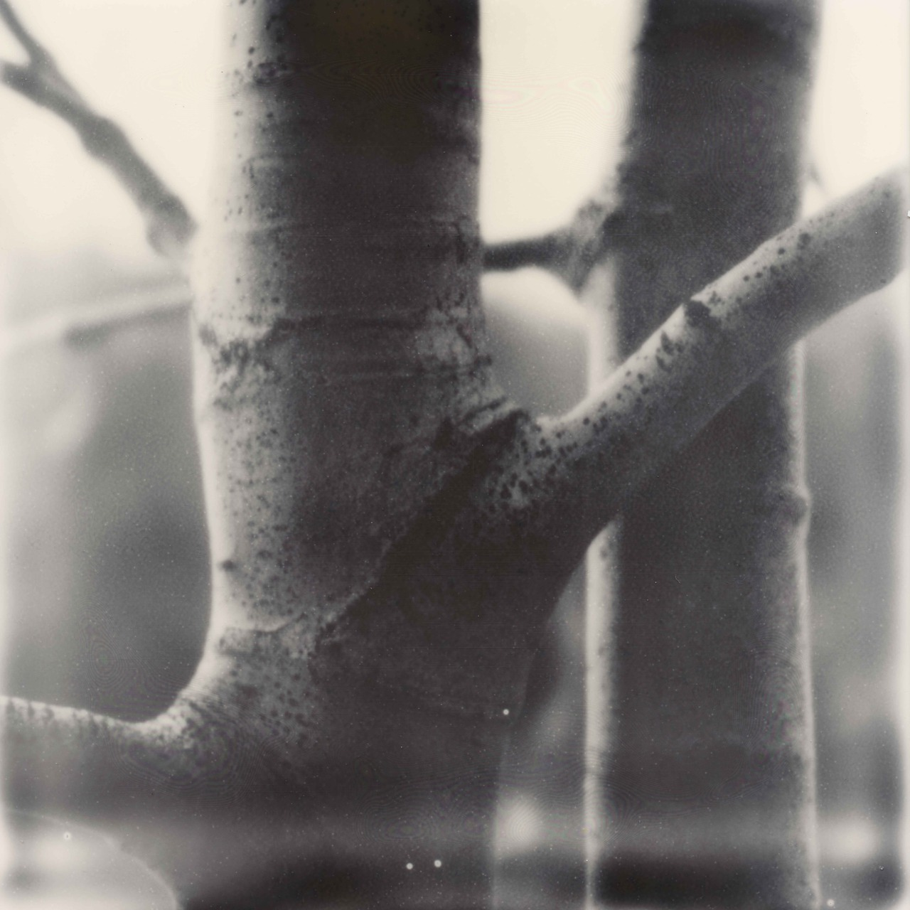 Ian Ruhter/ Impossible Film  /Polaroid /Aspen Tree /Lake Tahoe Ca, 11.27.2012