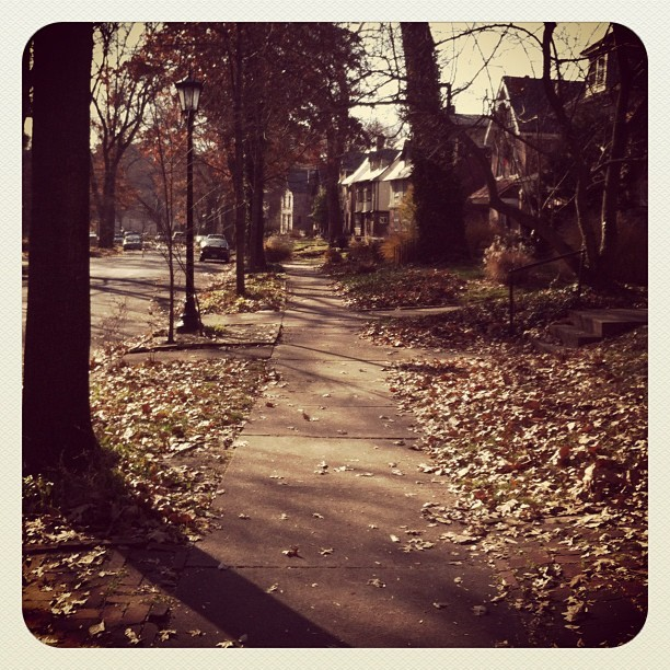 morning walks in st louie