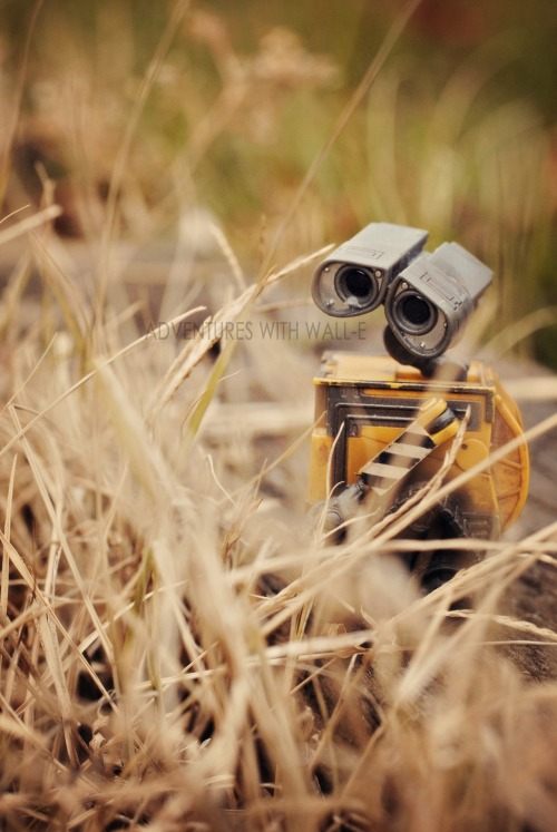 Don't let the bad stuff get to you, Wall-e. 332/366