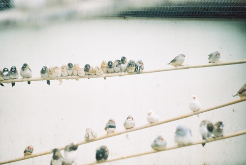 misconjectures:  bird on a wire by mtaylorz11 on Flickr.
