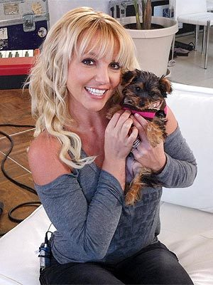 """I want you all to meet my new little baby girl @hannahspears.""  - Britney Spears, sharing a photo of her new canine cutie, on Twitter"