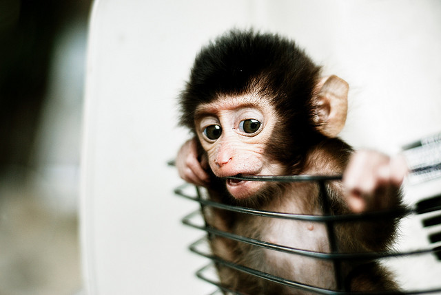 magicalnaturetour:  Baby Monkey in a Basket by Mohd Khomaini Bin Mohd Sidik on Flickr. :)  awwwww