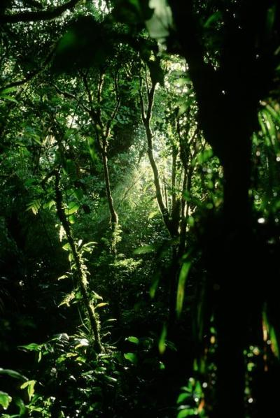 earthstain:  Mounte Verde cloud forest, Costa Rica.