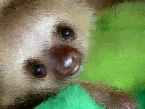 A sloth I painted using Psykopaint :)