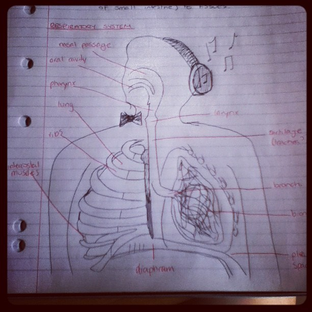 best respiratory system ever drawn. win. #WIN #breathing #pes #study #examsareapain #musical #headphones #bowtie #pensandpapers #redink #blackink #ink #fatman #followpls