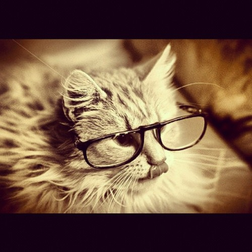 I hate when I got to Starbucks and a damn hipster cat is in there. #hipster #cat #starbucks #meme #glasses #feline #coffee #tea #whiskers #vans #bifocals #raybans #lens #4eyes #animal
