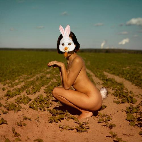 fussyfella:  Those rabbits can make a real mess of a crop of carrots.