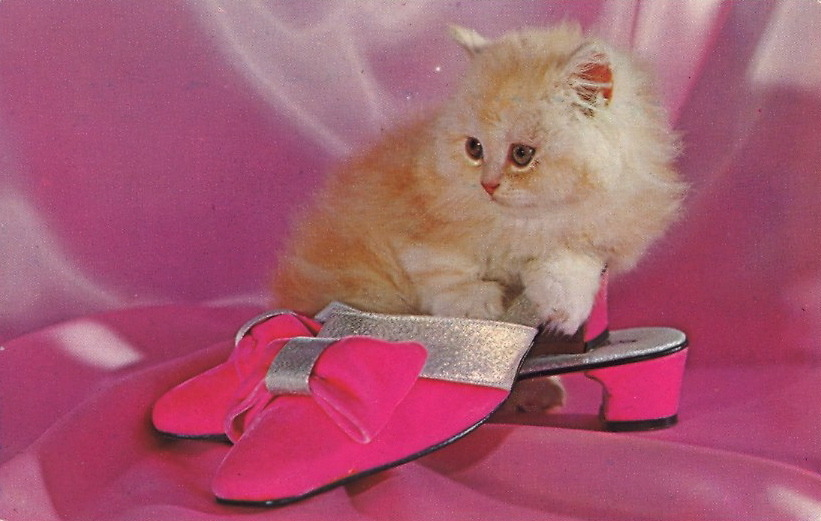 "CAPTION CONTEST — Pretty On Pink 12/4/12  7:56 PM: Thank you for your captions, everyone! The winner is Sandy Boldon for the caption: ""Years later, Fluffy became the first subject for Cat Psychotherapy"" Congratulations, Sandy Boldon! To claim your postcard prize, email me at bad.postcards@gmail.com with your choice of postcard from the list below and your mailing address. The RULES1) MAXIMUM of TWENTY (20) WORDS2) One entry per person3) Please enter your caption in the comments of this post4) Submissions will be accepted until Sunday, December 2, 2012 at 8:00 PM EDT The author of my favorite caption will have their choice of one of these original vintage postcards (all previously published on BAD POSTCARDS): 1) YOU LOOK PURRRFECTLY WELL TO ME2) BRATWURST CAPITAL OF THE WORLD3) DRINKING FOR THE JOB4) SPONGES FROM TARPON SPRINGS, FLORIDA5) MISS SUGARDALE—1958  HAVE FUN and GOOD LUCK!"