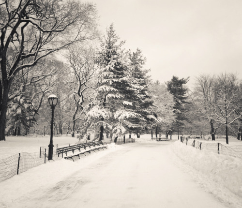 "Central Park winter trees covered in snow. New York City.  Winter crunches underfoot yielding to the heavy enormity of the sheer weight of souls in transition. Trees laden with snow frozen in thought stand dormant until the springtime.  It's on these sorts of days that the earth feels as if it is caught in a trance somewhere between dreaming and opening its frozen eyelids.  —-  I love when the snow first falls in New York City - especially in Central Park. The quiet muffled stillness and icy warmth combine to pause the city's frenetic energy for a few hours.  This was taken the last time we had major snowfall in Manhattan during a blizzard. In truth, it probably wasn't the safest idea to be walking around Central Park when the wind gusts were so terrifyingly high but during the moments when the winds stopped, it was eerily beautiful.    —-  View this photo larger and on black on my Google Plus page  —-  Buy ""In a trance - Central Park Winter Trees"" Prints here, email me, or ask for help."