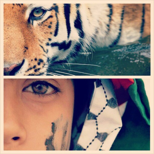 Palestinian Tiger : #Palestine #Nature #Strong #Gaza #Real #Child #Cute #Eye #Eyes #Love #Politics #Heart #War #Army #Fight #Fashion #Flag #Tiger #Peace #Religion #Land #InstaHub #InstagramHub #InstaDaily #Webstagram #PicOfTheDay #Photography #PhotoOfTheDay