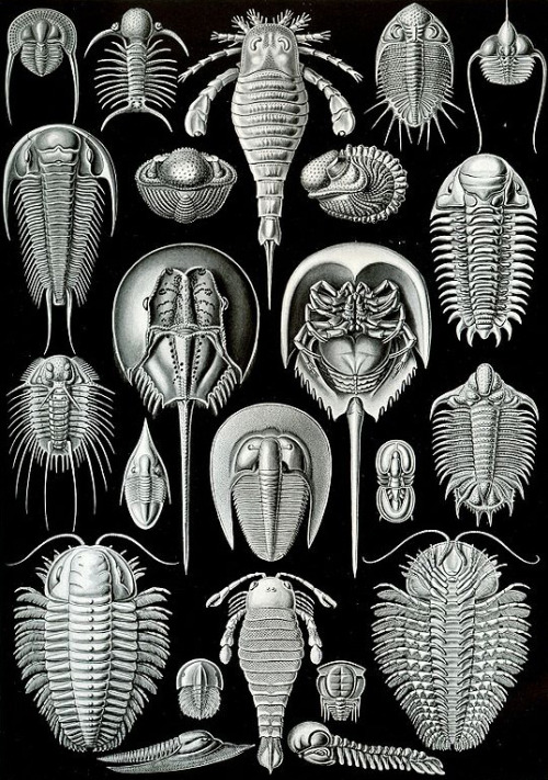 explore-blog:  Ernst Haeckel's stunning 19th-century illustrations of microscopic life forms and marine creatures.