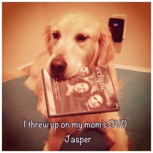 Jasper hates The Twilight Saga My Mom gave me this DVD to take a cute picture then I threw up on it – JasperView Postshared via WordPress.com
