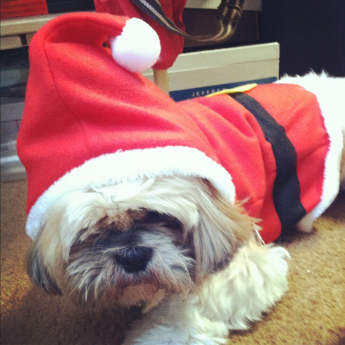 appathedog:  Woof woof! Santa Appa is coming to town!!!  Animals with Christmas crap on their heads.