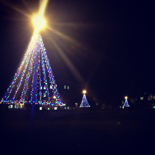 "thoughts-from-nowhere:  It's the most wonderful time of the year!  At night it is really cool how the street lamps form  ""stars"" at the top of the trees!"