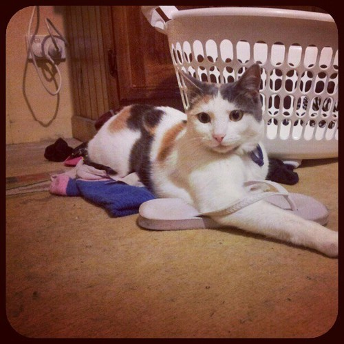 take those off cat. it's too cold for flip flops.