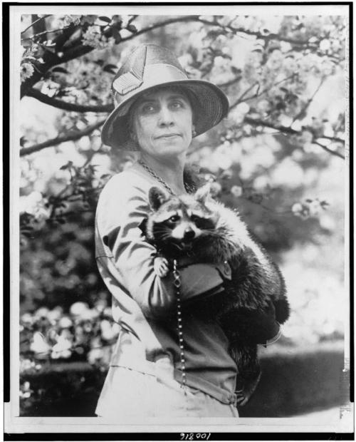 "(via Grace Coolidge: the First Lady kept a raccoon named Rebecca in the White House)  ""Mrs. Calvin Coolidge, half-length portrait, standing, facing front, holding her pet raccoon."" Taken between 1921 and 1923. Library of Congress, National Photo Company Collection."
