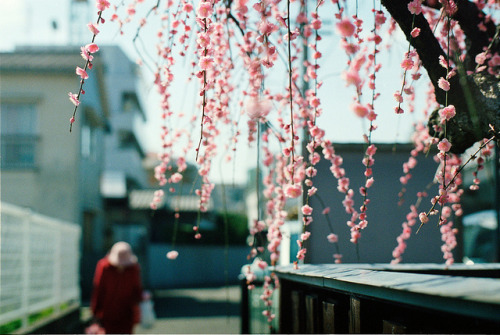 another spring by breeze.kaze on Flickr.
