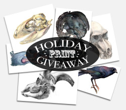 "emilyfundis:  HOLIDAY 2012 PRINT GIVEAWAY! Hey, folks!  I'm finally selling high-quality prints of my art through my Etsy store!  And to help spread the word, I'm having a giveaway!  Just in time for the holiday season! To enter your name into the magical internet hat, just reblog this post!  Three lucky winners will be randomly selected and will get an 8""x10"" print of their choice (pick from any of these prints!).  The winners will be announced on December 9th.  Thank you to all of my followers, both old and new.  Good luck!"