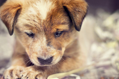 puppies are darn cute. why?