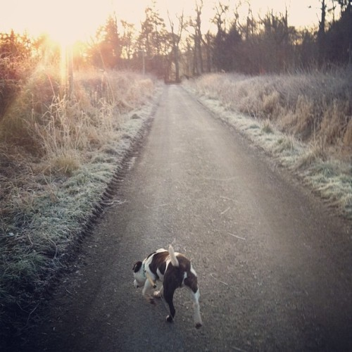 Lovely frosty walk this morning with this lad