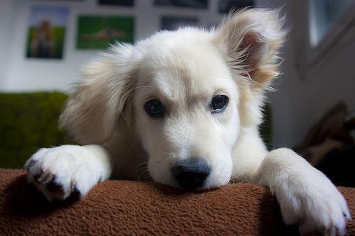 Dogs pictures / fotografije pasa - Page 7 Tumblr_me8z885pwv1r1iv4bo1_500