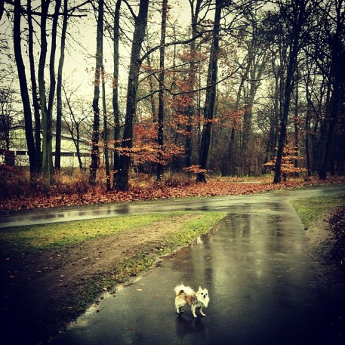 Walking Yuki. it's so cold today