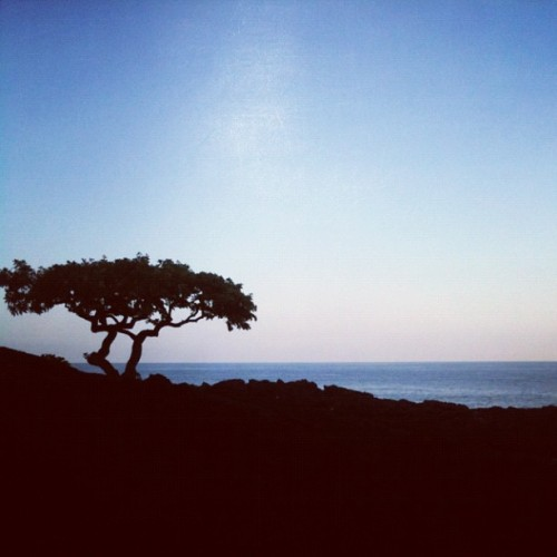 #oceanfront #tree #silhouette (at Sheraton Kona Resort & Spa at Keauhou Bay)