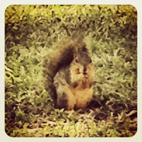 Squirrel! #austin #squirrel (at Texas State Capitol)