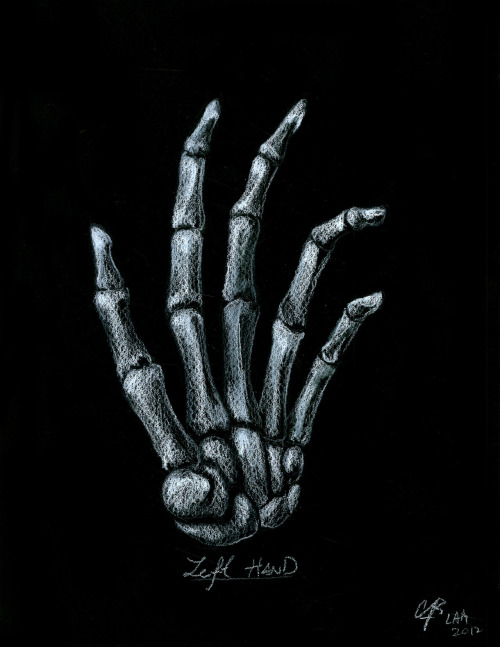 cb-lam:  Left hand, commission work, 8.5x11, color pencil, 2012