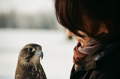 restaurer:  Ladyhawk2 by Herr_Laifer on Flickr.