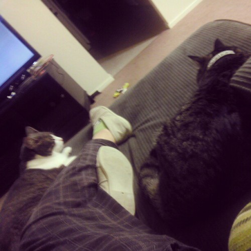 Cuddles with #sundai and #axel #lazy #cold #personal #cat #kitty #cute #