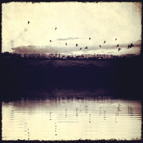 #nature #birds #fly #sea #lake #reflections #sky #landscape #igersitalia #igersmilano #wearejuxt #shootermag #contestgram #milano #italy #picoftheday #mustsee #duotone #iphoneart #mobilephotography #iphonesia #iphoneography