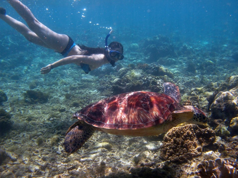 Swimming with an adult green turtle!  Apo Island, Negros Oriental (Philippines)