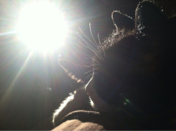obvious cat photo. perfect lighting while my little friend sat on my chest. i'm such a sucker for backlight.