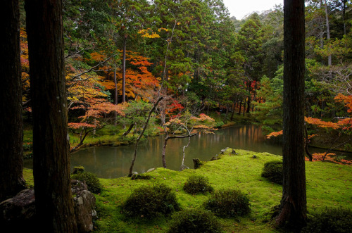 Saihouji(Temple of moss) by tez-guitar on Flickr.