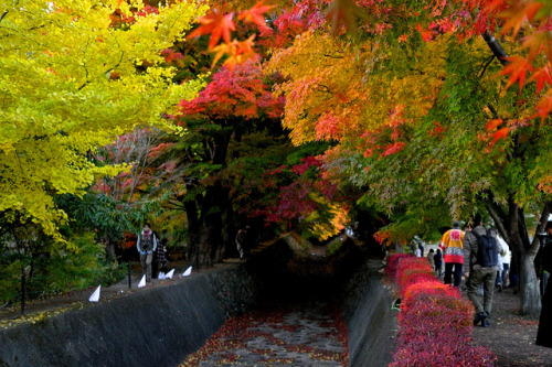 Autumn Color by tez-guitar on Flickr.