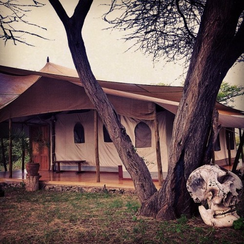 Chief's Tent at Joy's Camp. Shaba Reserve. Kenya. via @mrjberger
