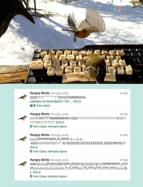 Tweeting Birds Awesome:  By placing pork fat on a keyboard, Latvian artist Voldemars Dudums was able to convince hungry tomtits to tweet.   (This is Colossal via Neatorama)