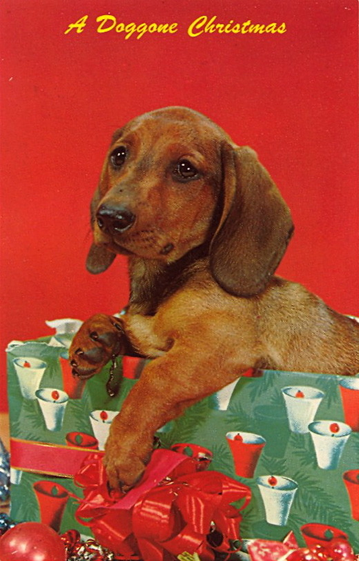 A DOGGONE CHRISTMAS The wrapping paper design: BELLS or COCKTAILS?
