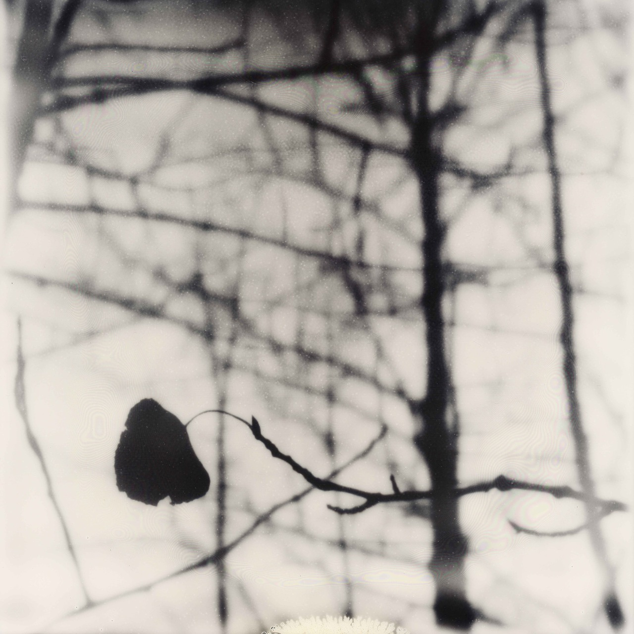 Ian Ruhter/ Impossible Film  /Polaroid /Aspen Tree /Lake Tahoe Ca, 11.39.2012
