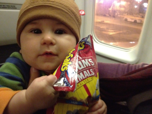 Gratuitous Hugo-on-a-plane photo to ring in the weekend.   (No, he's not eating animal crackers at this point, though he does love the way the bag crinkles)!