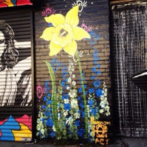 Happy Friday LA. @andrealahue #randomact #flower #flowers #garden #streetart #streetartistry #art #artist #paint #painting #alley #alleyart #urbanart #daffodil #narcissus #brick #brickwall #igpic #igersla #losangeles #hollywood #LA
