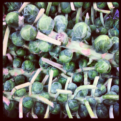 Happy holidays! Did you know this is how Brussel sprouts grow? Spotted them at trader joe's by my house around thanksgiving time. Thought it was interesting. I actually like Brussel sprouts now!  :) Sorry I've been absent.  It's not that I haven't been cooking, I just haven't been documenting it on tumblr.  If anyone is out there and wants to keep up: Follow me on:  Pinterest to see where I get my cooking inspiration from. And find me on:  Instagram to see what I cook and random things I see. In the meantime, I will post pics already from my instagram, but with links to the recipes I used or inspired me.
