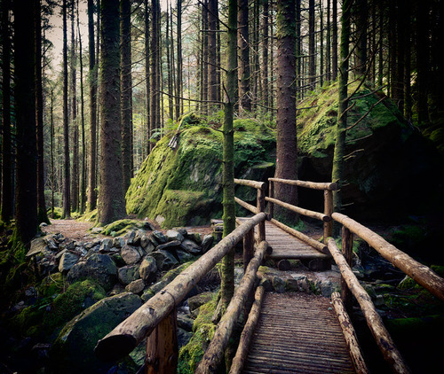 bluepueblo:  Forest Path, Cork, Ireland photo via conalthomson