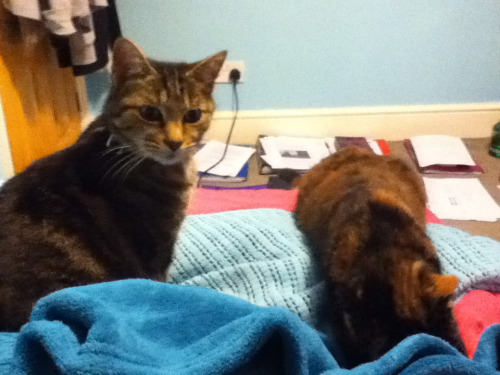 It's 2am and my bed has been taken over by cats