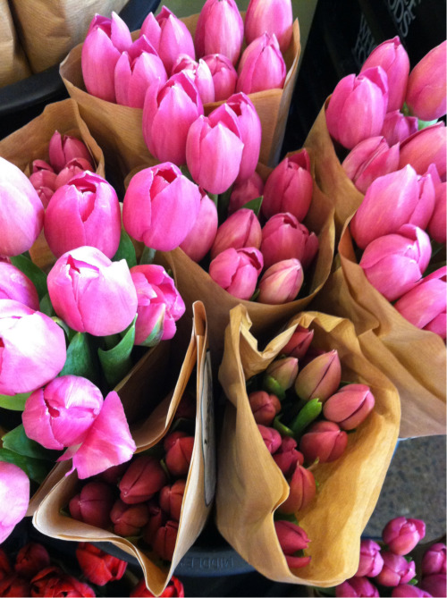 lushclub:  ex-oti-c:  these are the most vibrant tulips i've ever seen  I wanna shove my face in them idk why