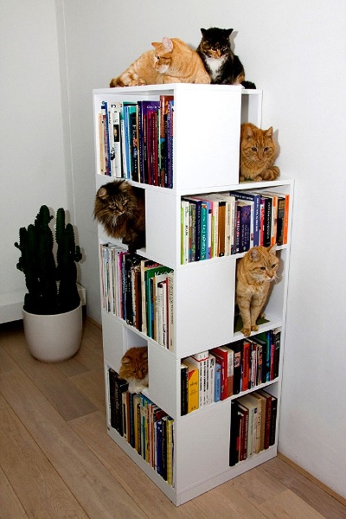 quotesfromfiction:  Storage for cats AND fictional friends!